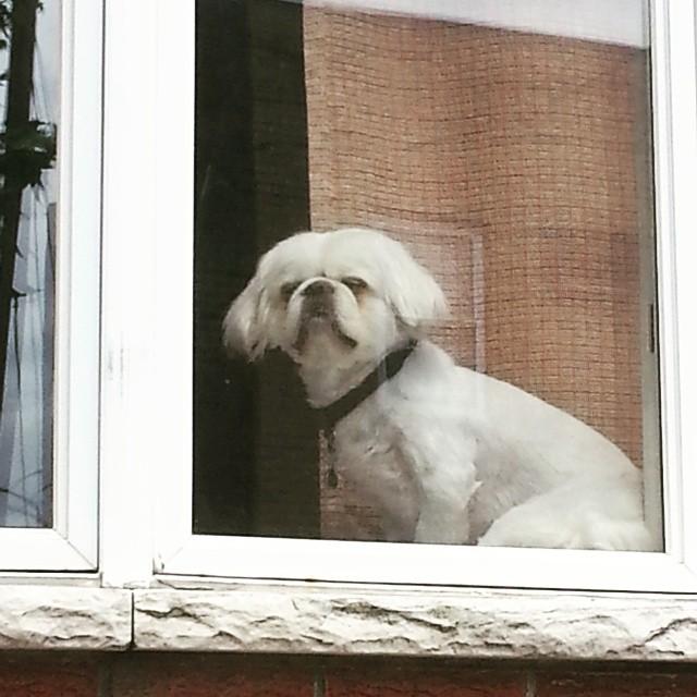 southphillydog